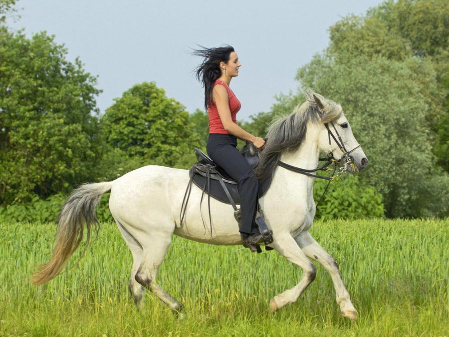 Верхом на лошади картинки