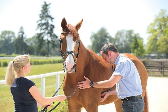 При заболевании лошадь надо показать ветеринару