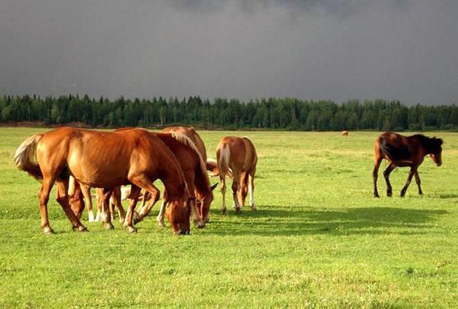 Все породы лошадей подвержены многим болезням