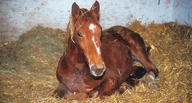 Бешенство лошадей заразно и для человека