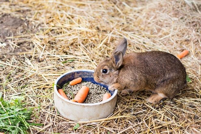 В зимнее время кроликам дают сено, овощи и ветки