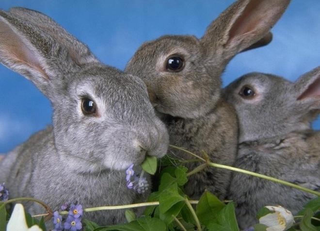 Базовые знания о правильном питании кроликов помогут при их разведении