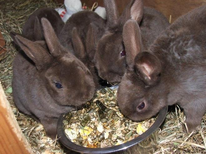 Для сбалансированного питания давайте кроликам жмых
