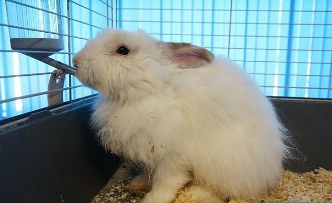 Кроликам нужно регулярно пить, особенно после сухого корма