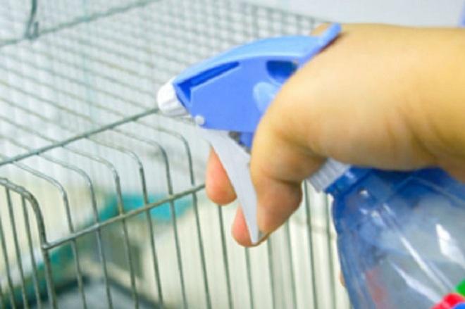 При стафилококкозе и пастереллезе антисептиком опрыскивают клетки и помещение