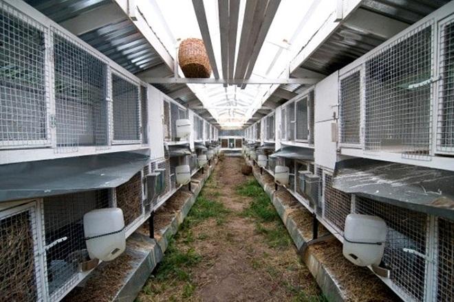 Обеззараживание после эпидемии животных проводится более тщательно