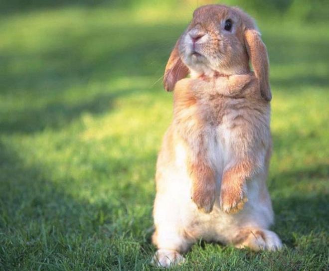 Кролика нужно забивать быстро и правильно