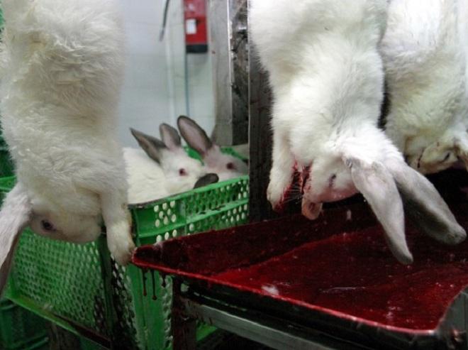 При разведении для мяса на 4-5 месяц кроликов забивают