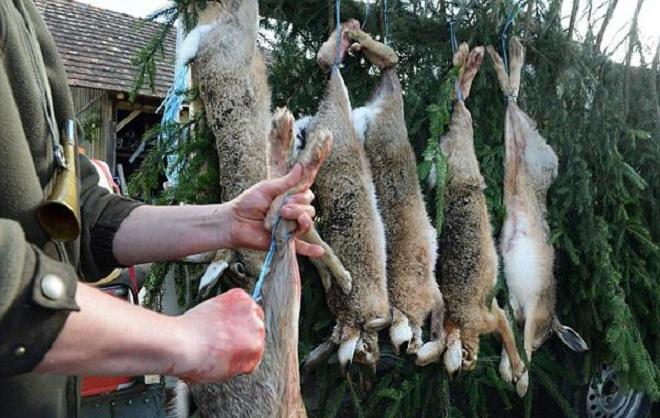 Забитое животное подвесьте за ноги и обескровьте