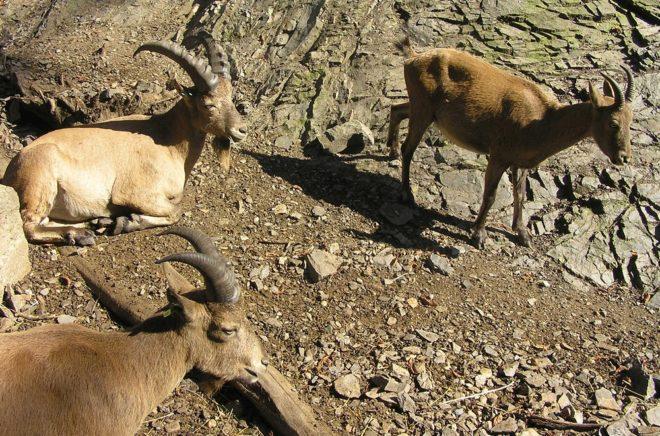 Кавказские туры на горных склонах