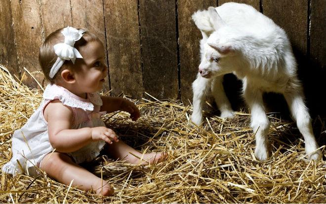 Клички козлятам обычно дают с рождения