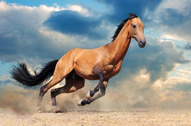 Важность клички коня трудно переоценить