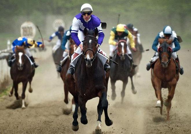Спортивному коню нужна кличка настоящего чемпиона