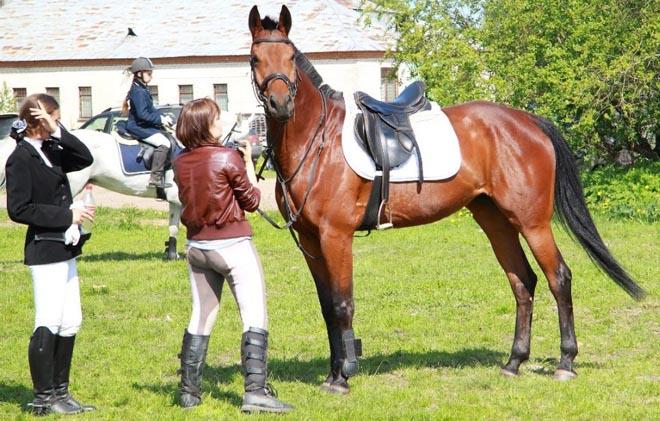 Для лошадей с родословной клички дают строго по правилам