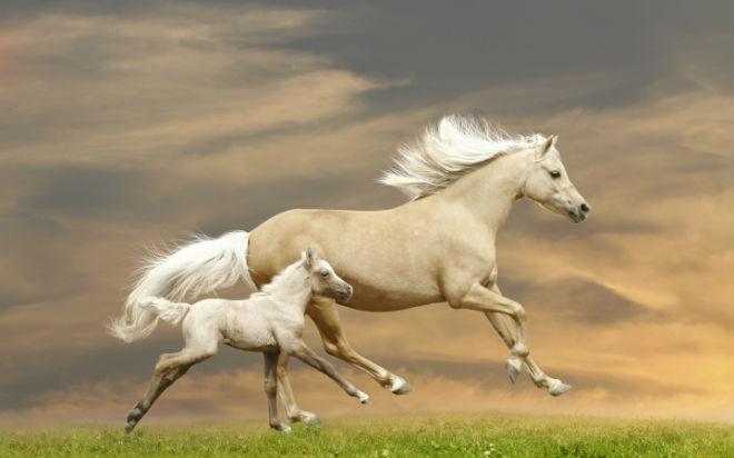 Лошади входят в пятерку самых прекрасных животных в мире