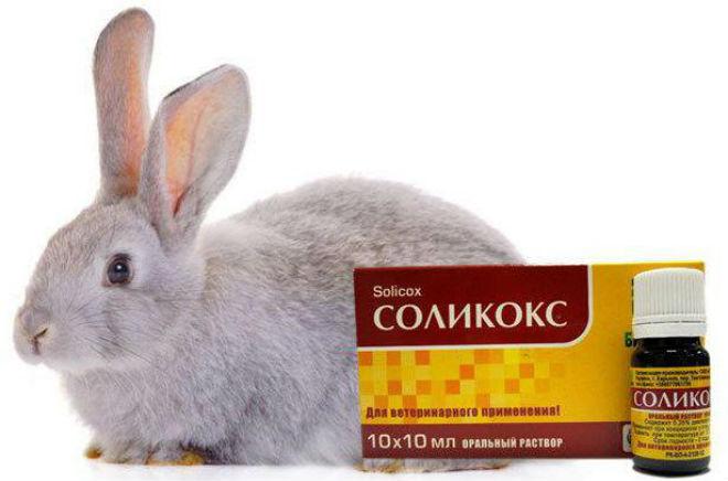 Соликокс является противопаразитарным препаратом