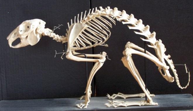 Анатомия пушистых питомцев