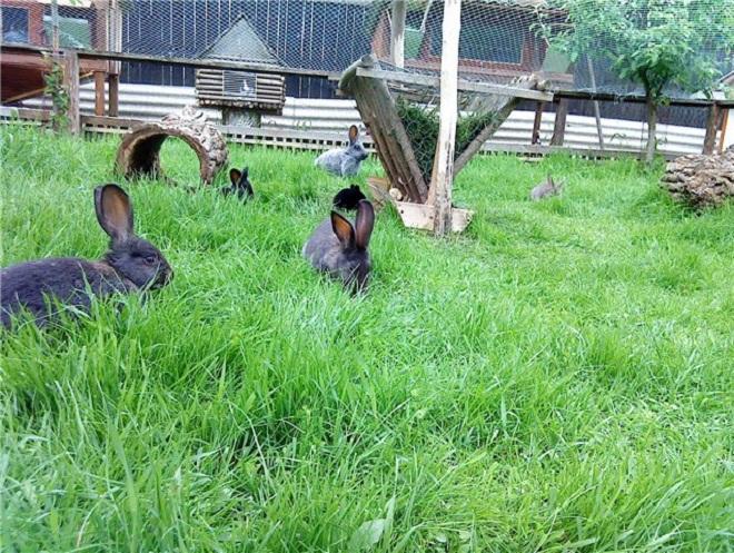 Вольеры отличаются природными условиями содержания кроликов
