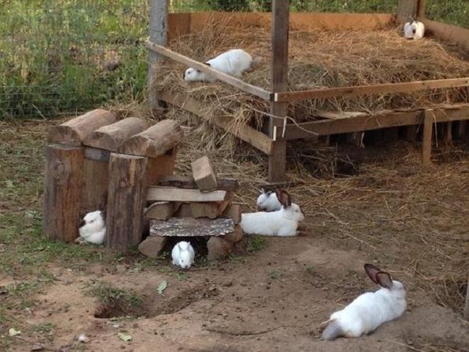 В вольере увеличивается процент выживших крольчат