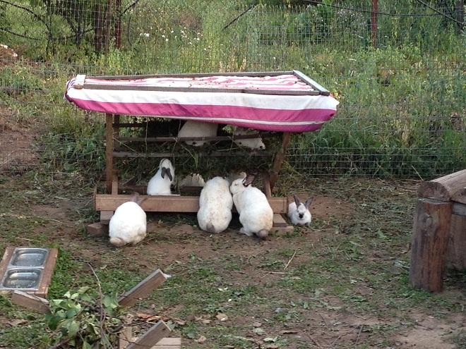При правильной организации вольера животным будет комфортно
