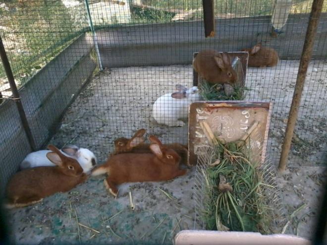 В вольере помещают животные-ровесники