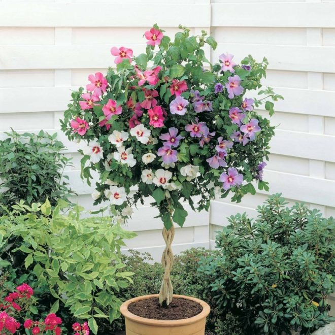 Композиция из цветков разного цвета