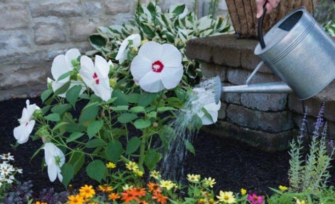 Цветок нужно часто поливать