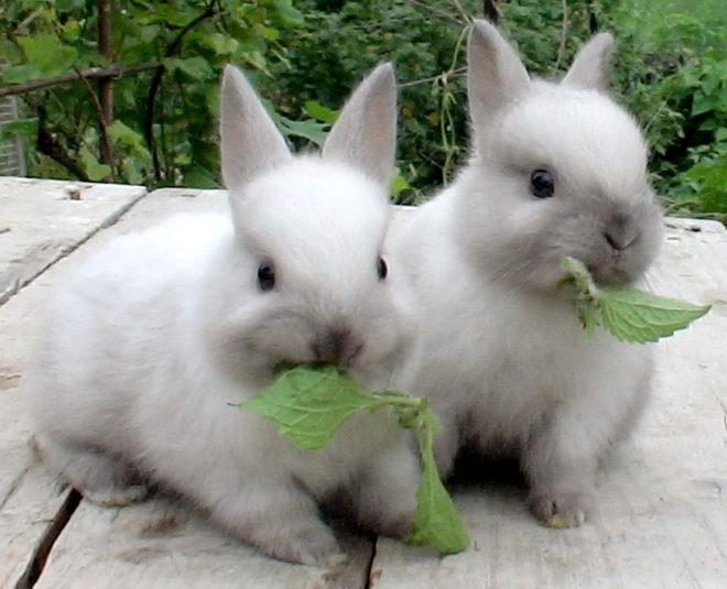 Сбалансированная диета для кроликов