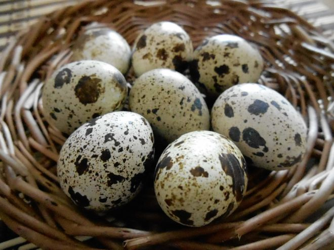 Яйца техасского перепела