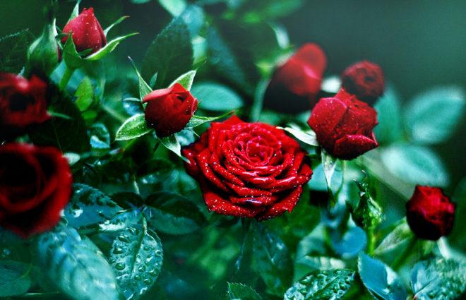 Настоящий королевский цветок