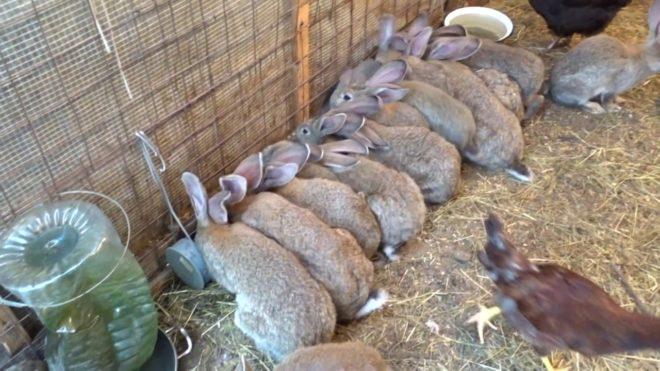 Расширенное меню для кроликов