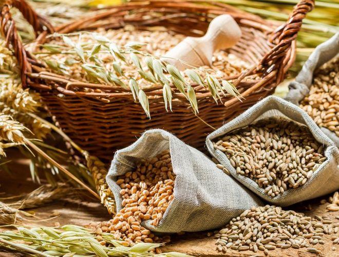 Заготовка зерновых культур для гусей