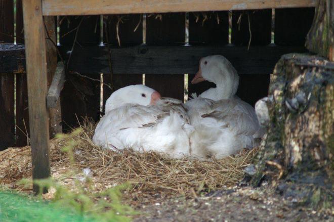 Важно правильно сделать гнездо