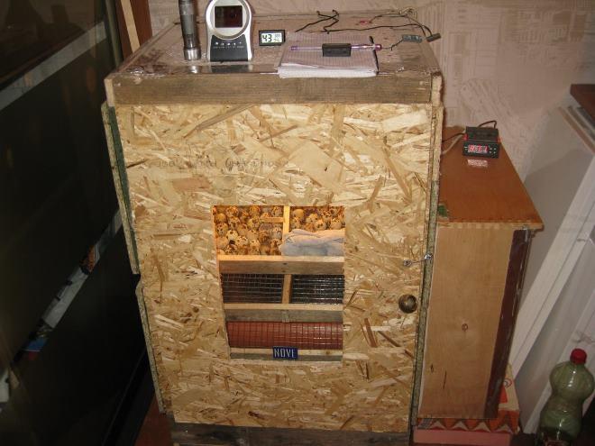Корпус инкубатора делают из фанеры