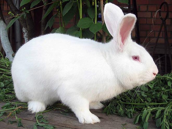 Размножение кроликов сопровождается множеством хлопот