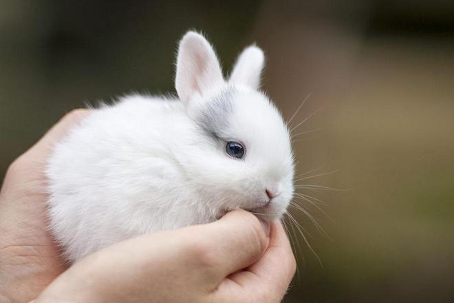Декоративные кролики очень общительны