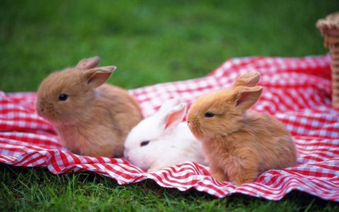 Лучше всего покупать кролика когда он окреп