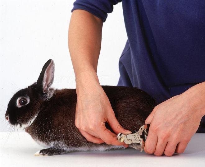 Обрезать ногти надо с осторожностью