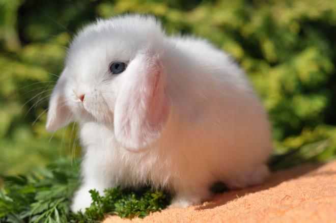 Нужно выводить кролика на прогулку