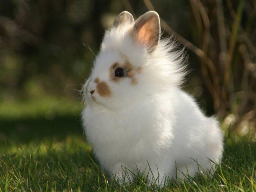 Как долго будет жить декоративный кролик, зависит от ухода владельца