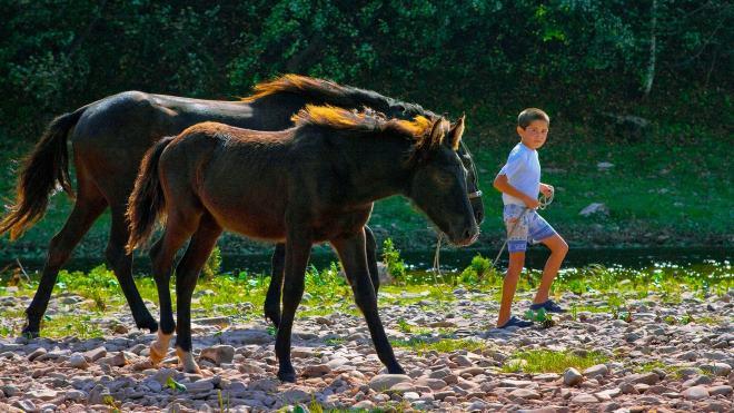 Лошади этой породы отличаются своей преданностью
