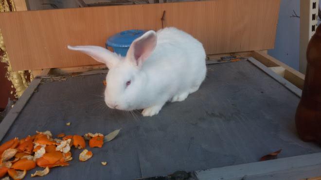 Кролики легко и быстро привыкают к новому месту