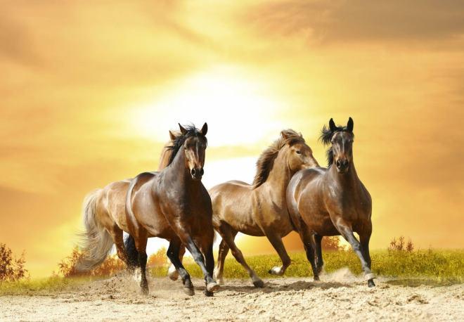 Когда-то в природе были только дикие лошади