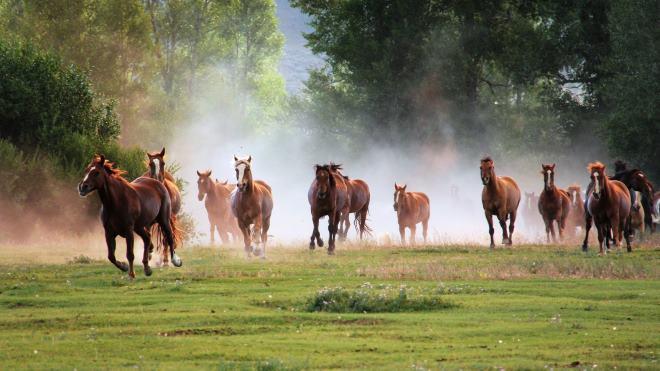 """Лошади перемещаются табунами и не подпускают """"чужаков"""" к себе"""