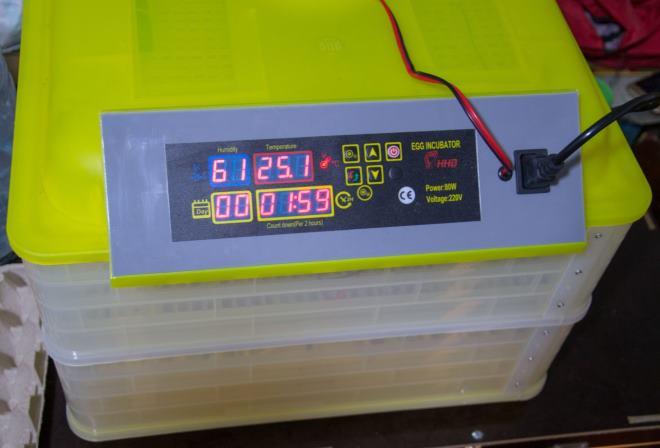 Важно следить, чтобы в инкубаторе не было резких перепадов температуры