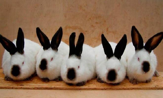 Преобрести кролика очень просто, но уход - дело хлопотное