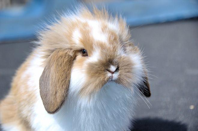 Кролики любят занятие с рулоном