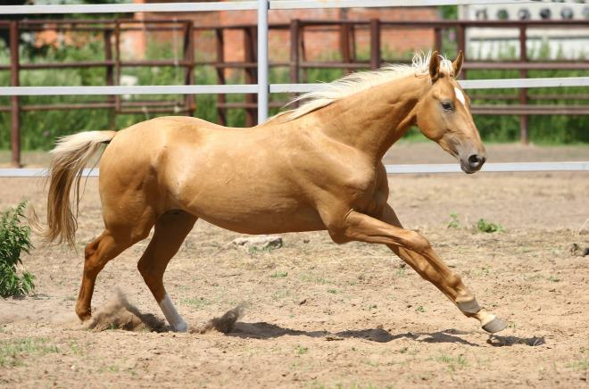 Лошади ценятся не только из-за их роли в быту