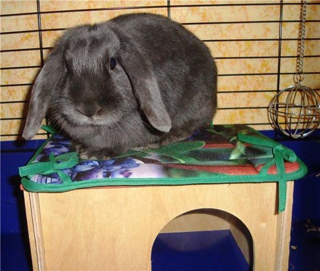 В первые дни нужно оставить кролика в покое