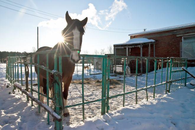 Зимой этих лошадей мыть не стоит
